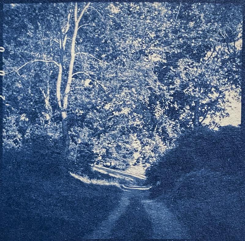 rural lane, deep shadows, late light, Biltmore Estate, Asheville, NC, cyanotype, medium format film negative, Ricohflex Dia M, Fomapan 200, Moersch Eco developer, 8.17.20