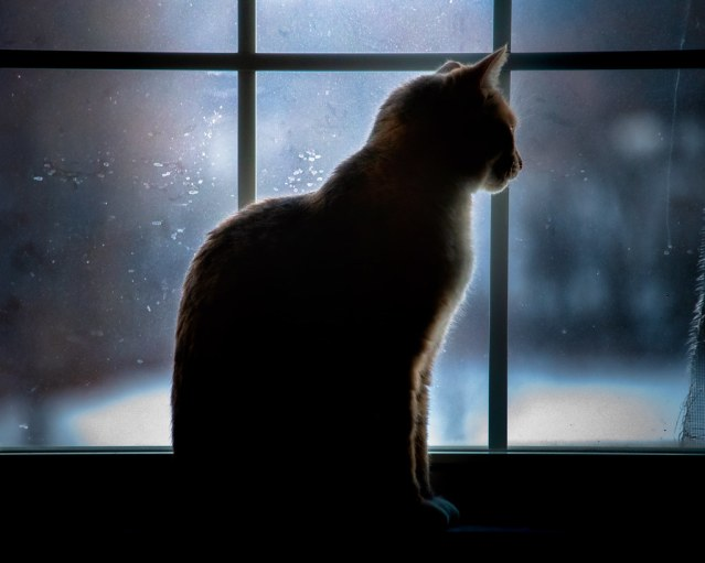Sugar looking out into the snow