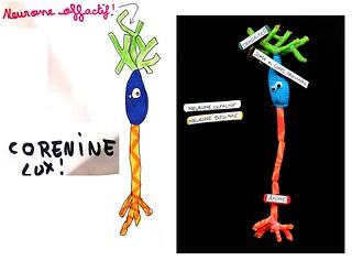 Dessins de neurones