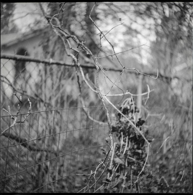 dried vines and bare branches, winter, metal fences, yard, Asheville, NC, Ricohflex Dia M, Fomapan 400, Moersch Eco developer, 2.20.21