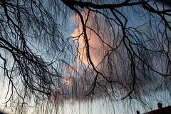 Willow Tree branches sunset