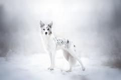 Winter Ballerina