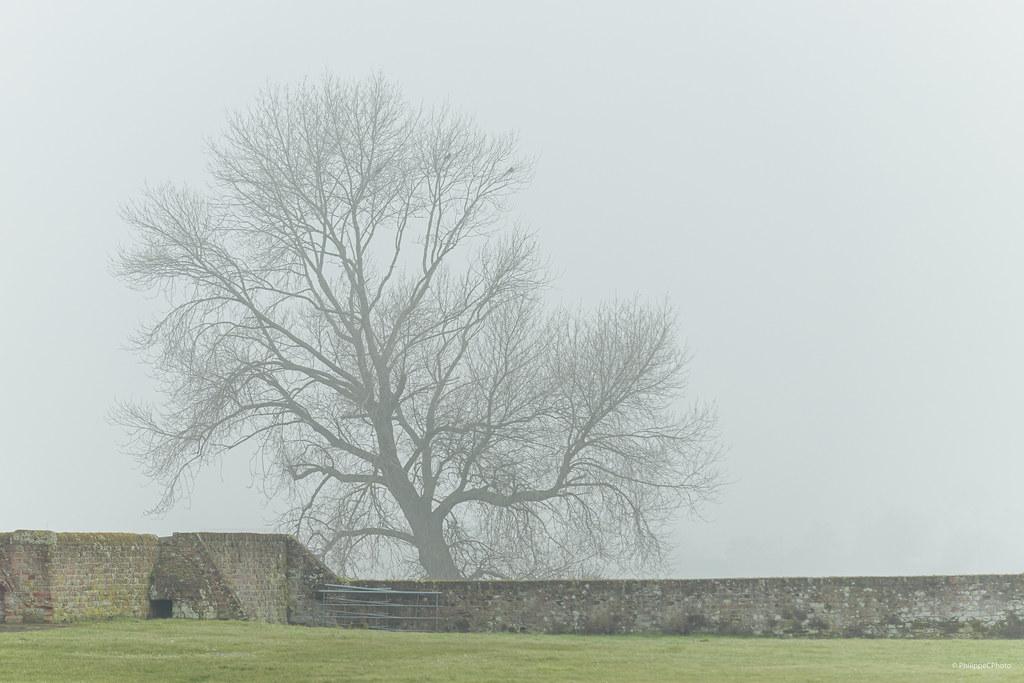 Misty Flanders Fields