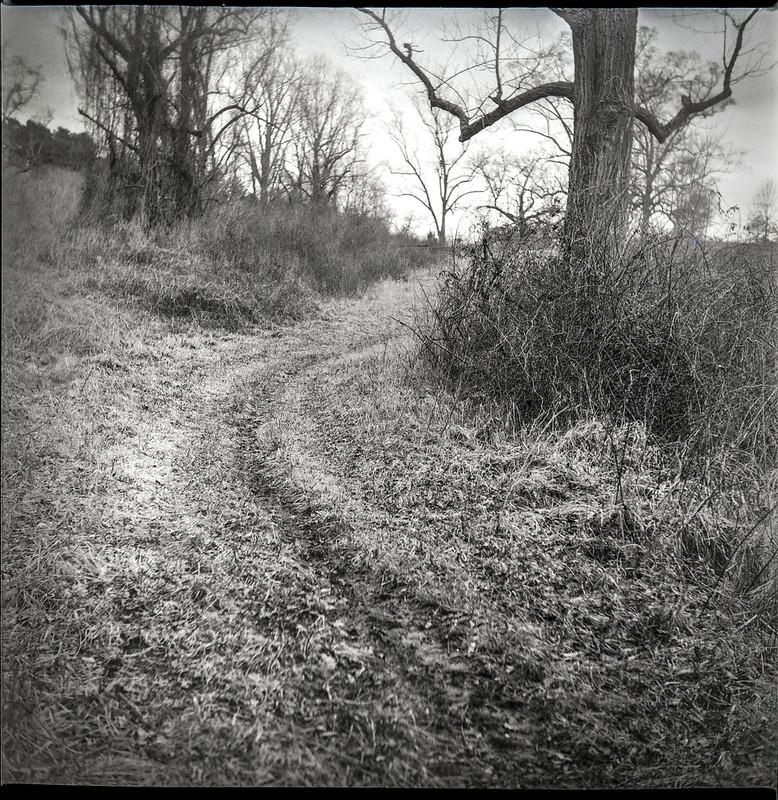 rural lane, bare trees, dried vegetation, dormancy, Biltmore Estate, Asheville, NC, Yashica D, Fomapan 400, Moersch Eco developer, 2.28.21