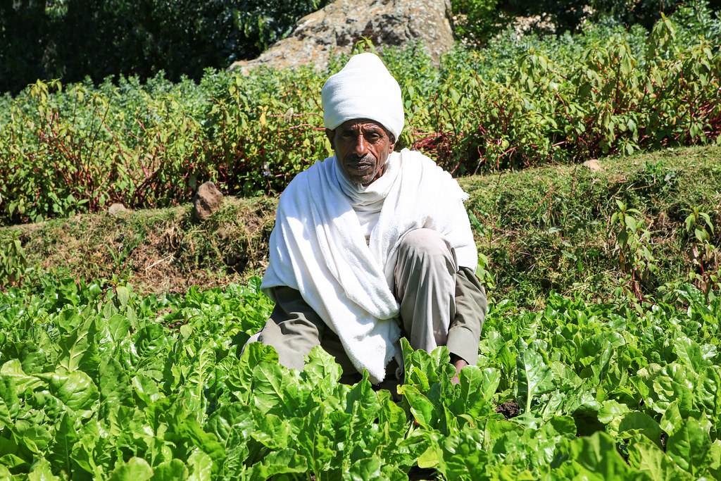A farmer in his fodder beat plot in Embahasti, Tigray region