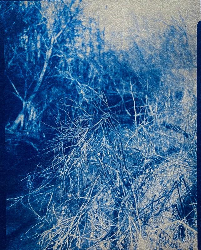 Cyanotype Version, small stream, knarly vegetation, abandoned land below Sa's Club, Asheville, NC, Folmer Graflex Corp. R.B. Series B, Kodak Anastigmat f-4.5, Adox CHS 100 II, Ilfosol 3 developer, 3.21.21
