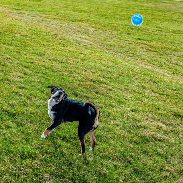 Charlie, tracking a ball in the air.