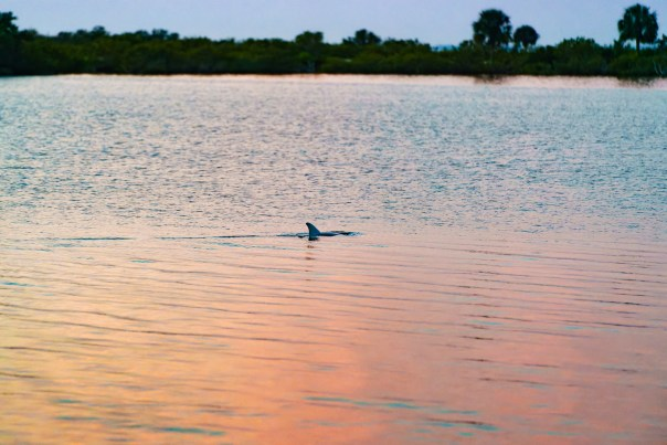 Do Dolphins watch the sun rise?