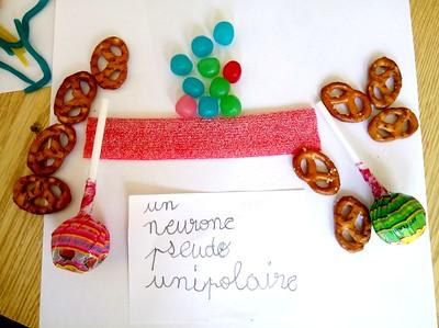 Photos bonbons neurones 2e trimestre 2017 Périscolaire - Savanturiers et Mairie de Paris.