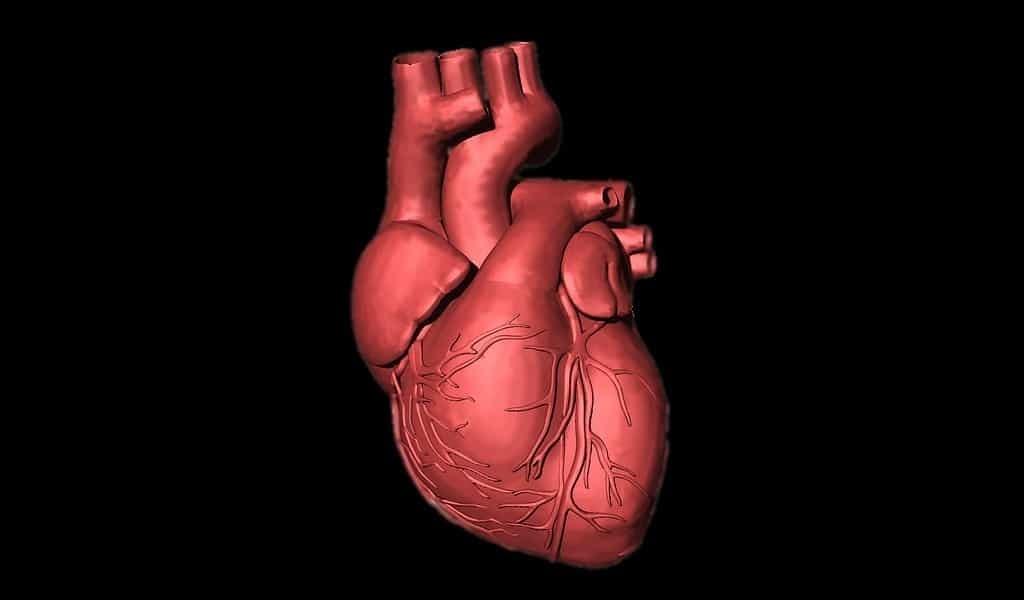 un-patch-aide-à-former-des-vaisseaux-sanguins