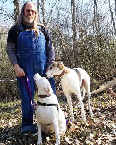 D9 of #AuthorLifeMonth: COVID Coping. A whole lot of it involved doggos and overalls (among other things). #Cane #dogsofinstagram #greyhound #greyhoundsofinstagram #Carla #pitbullsofinstagram #pitbullmix #pittie #staffordshirebullterrier #staffiesofinstag