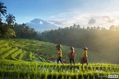 Farmers on Rice Terraces
