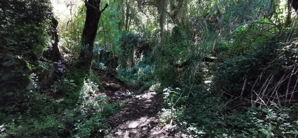camino flora senderismo Barranco del agua Fuente Agria Teror Gran Canaria 06