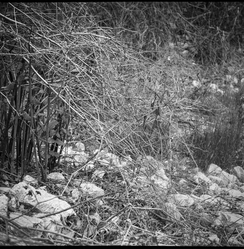 thicket, stones, creekside, abandoned land behind Sam's, Asheville, NC, Ricohflex Dia M, Fomapan 200, Ilfosol 3 developer, 4.24.21