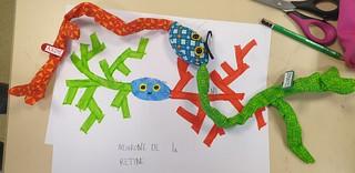 Neurone bipolaire de la rétine