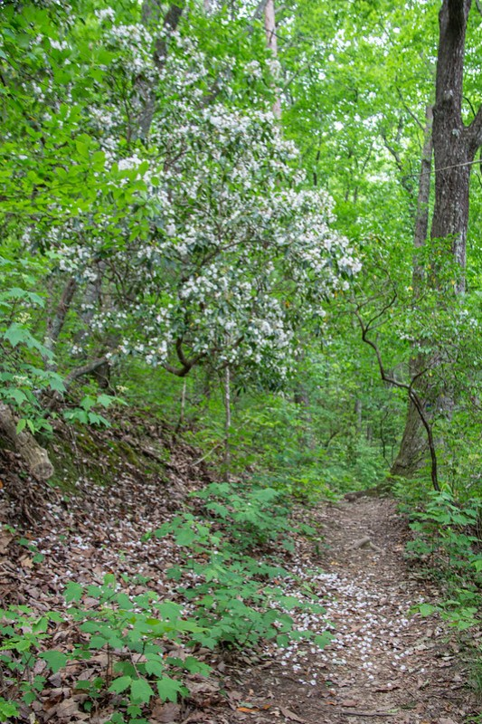 Ritchie Hollow Trail26