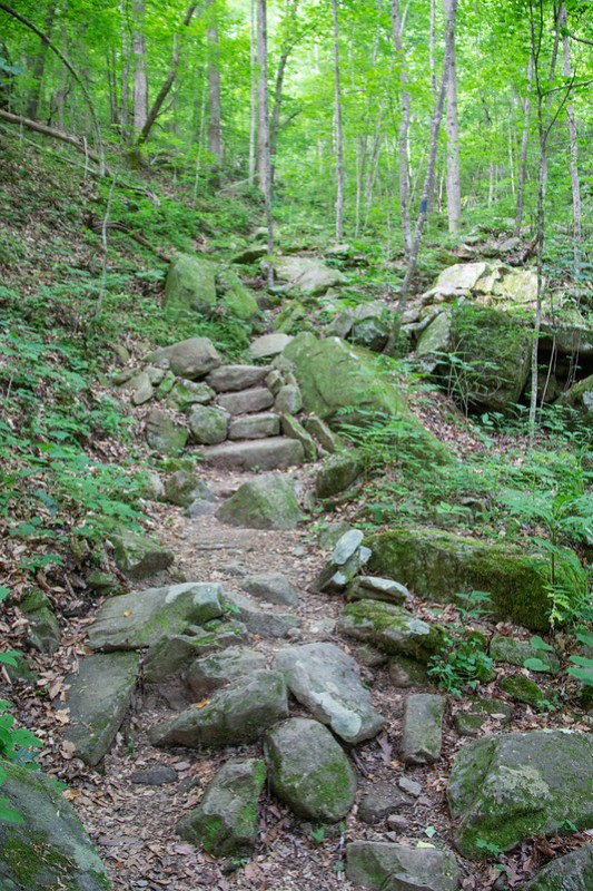 Ritchie Hollow Trail16