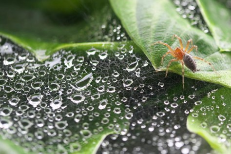 蜘蛛の巣に水滴