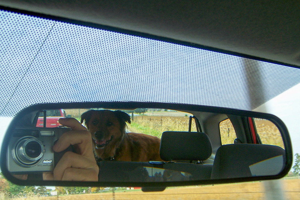 Gracie in the rear view