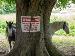 Two horses tree