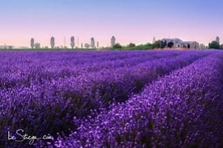 #violetworld