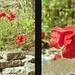Rosso mattone