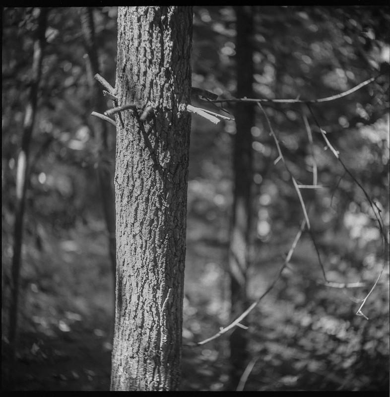 linear movements, tree limbs, tree trunk, forest, Asheville, NC, Welta Weltur, Fomapan 200, HC-110 developer, 7.6.21