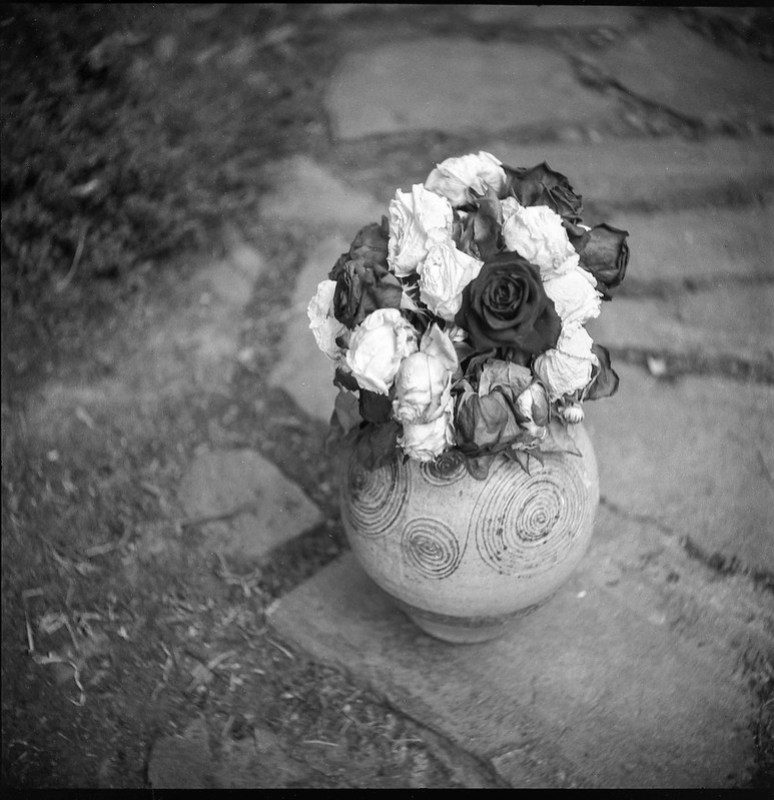 bouquet of roses, wilting, large pottery vase, stone pathway, pavers, yard, Asheville, NC, Welta Weltur, Fomapan 200, HC-110 developer, 7.7.21