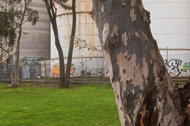 Trees and silos at the Western edge of Parsons reserve 2021-07-23 14:53:52