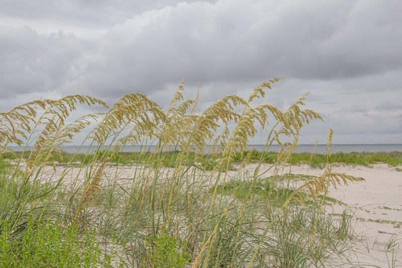 Gulf Coast Vacation575