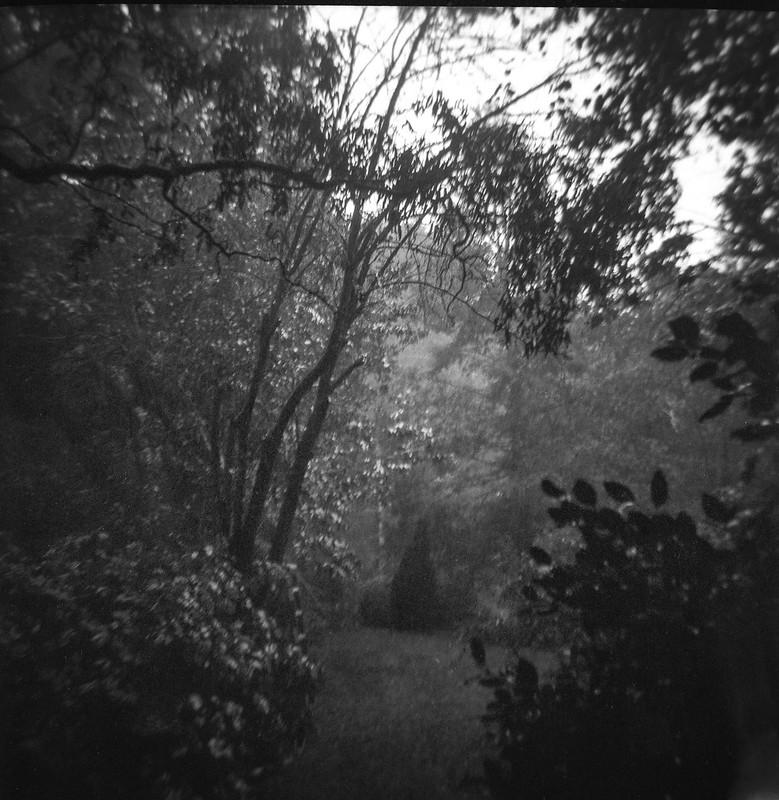 from the studio front door, steady rain, early evening, trees and shrubs, Ashleville, NC, Kodak Duaflex III, FPP Wolfman 620 film, HC-110 developer, 7.25.21