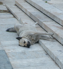 When you just HAVE to go to sleep. Athens.