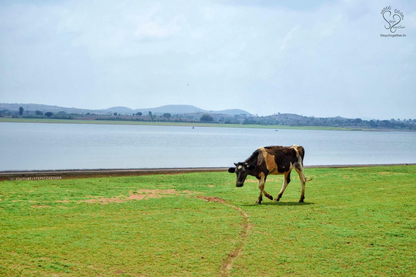 Kabini Backwaters Grassland