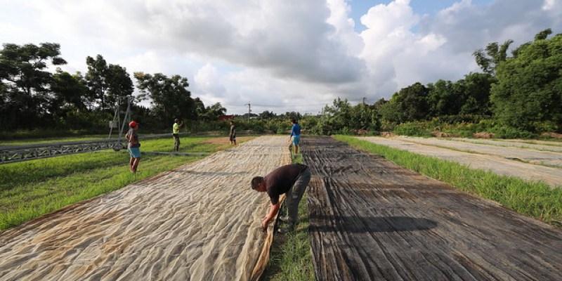農人帶路:台南官田旗哥育苗場