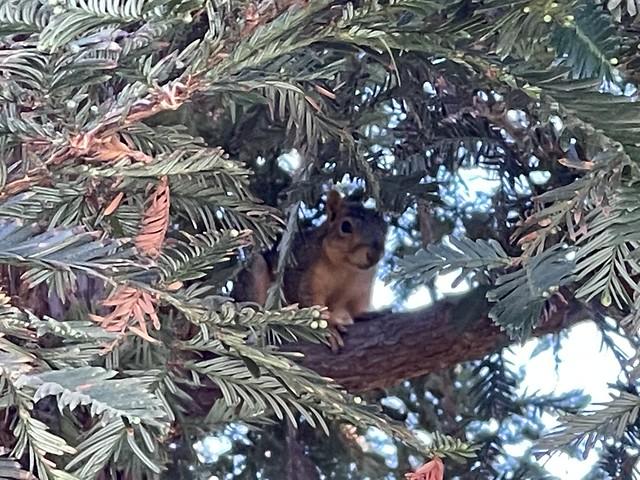this squirrel