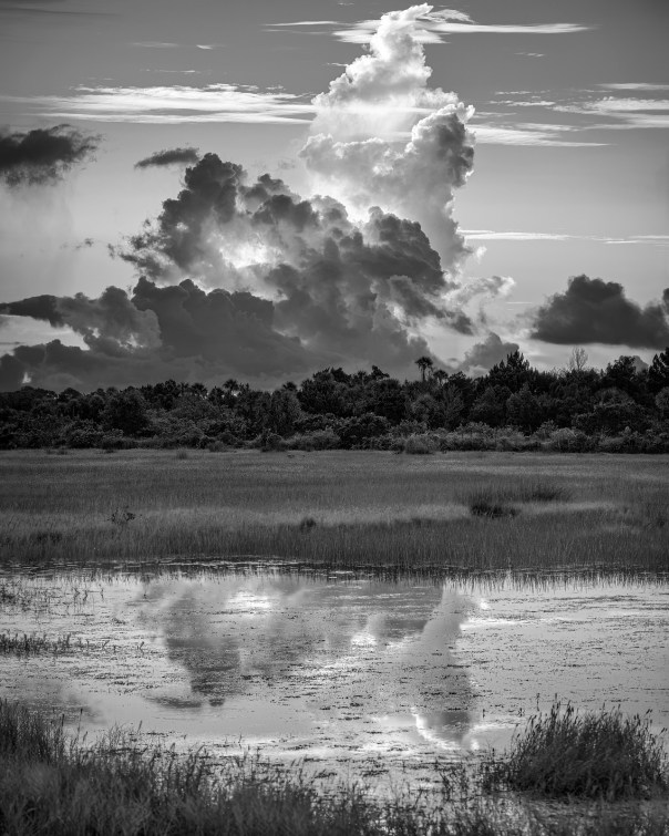 Wetland Weather