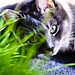 Green Eyed Laddie