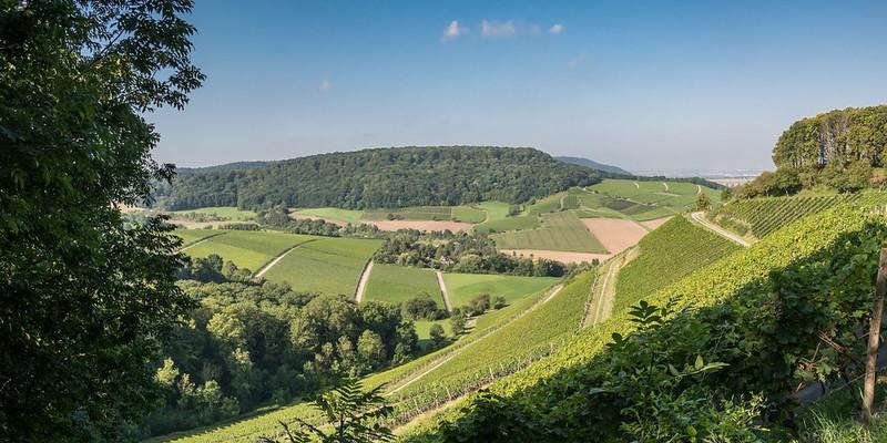 Pano Beste Weinsicht