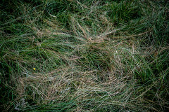 grass-sign-Cracow-MD-2019-11detail
