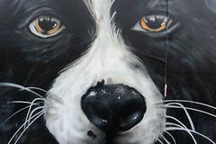 Dog graffiti close up