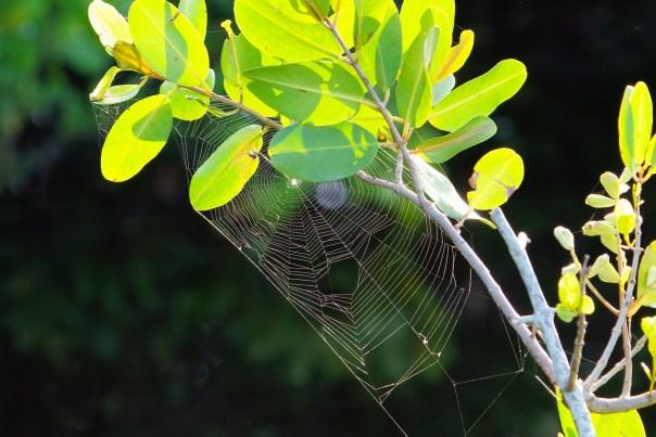 Web and Mangrove