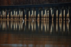 Egrets and Trestle