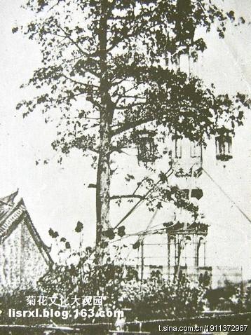 十二桥花街与百鸟归巢灯景