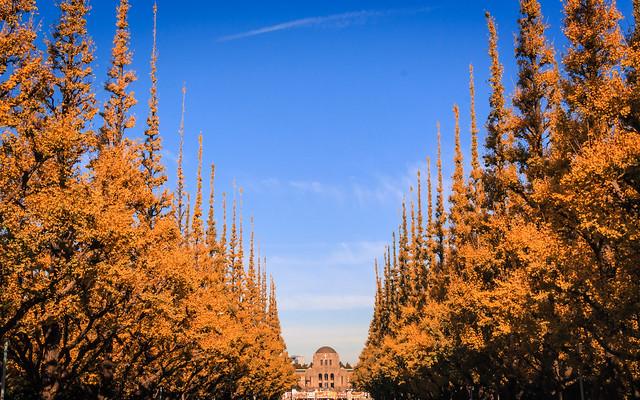Yellow Avenue