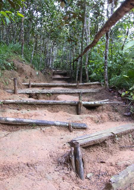 Caminho até a tribo