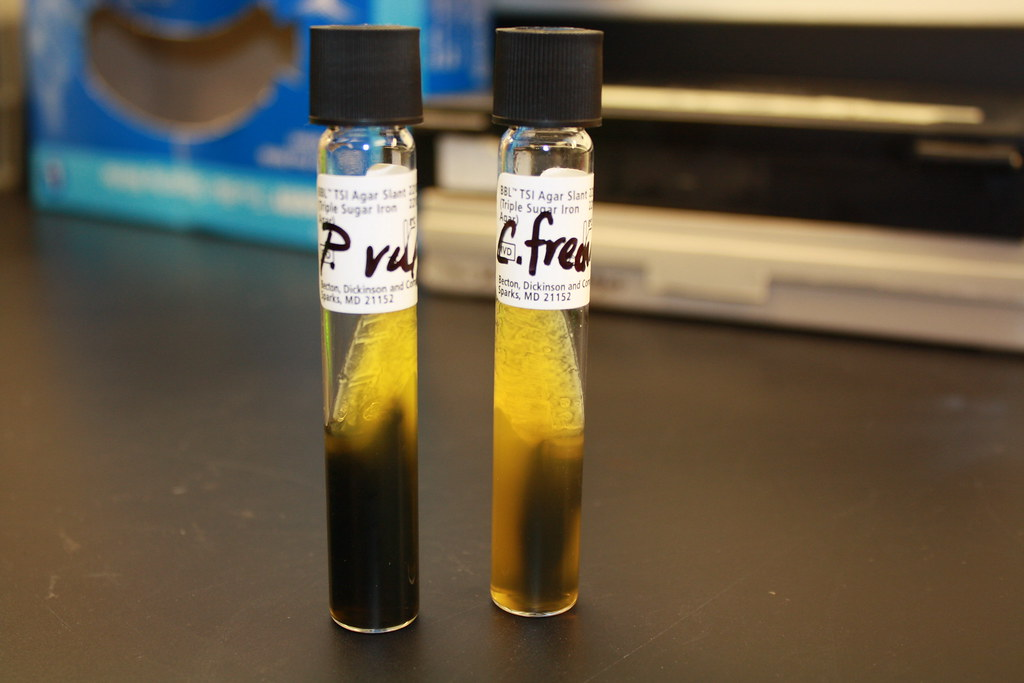 A A H2s Production On Tsi On Left Proteus Mirabilis