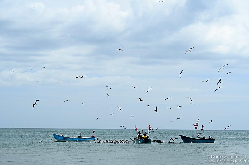 Las aves aprovechando la pesca