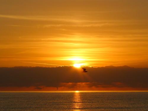 Beach Sunrise with Bird