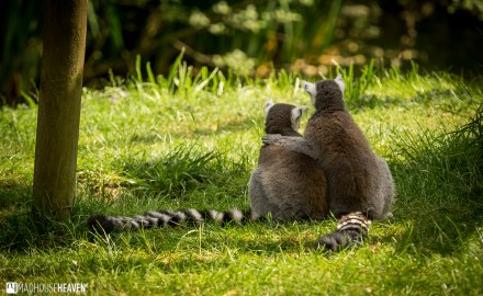 Safaripark Beekse Bergen - 0158