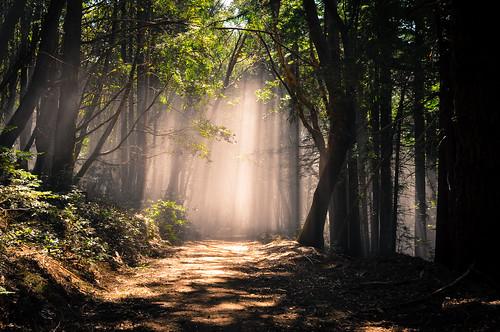 Fog on Usal Road